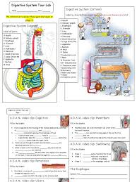 digestive system tour activity form2 pdf human digestive system