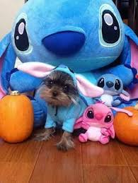 Halloween Costumes Lilo Stitch Stitch Hat Halloween U0027m Gonna Lilo