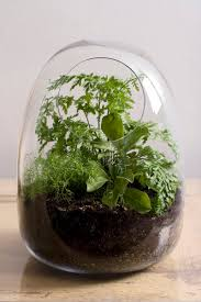blown glass terrarium containers delightful hand blown glass