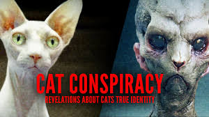 Cat Alien Meme - cat conspiracy revelations about cats true identity youtube