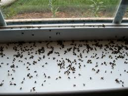 sinks small gnats in kitchen small flies in bathroom sink small