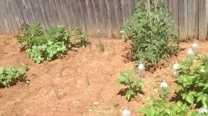 organic vegetable veggie garden near melbourne australia youtube