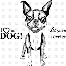 hipster dog boston terrier in top hat and bow tie vector image