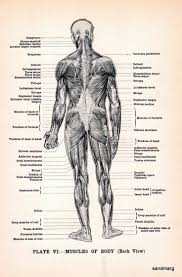 Anatomy And Physiology Human Body 17 Best Human Body Stock Images On Pinterest Human Anatomy