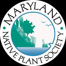 cheap native plants i will look into local maryland native plant groups to see if i
