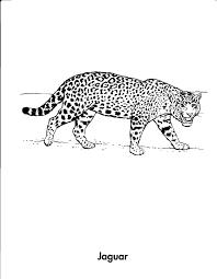 cheetah print coloring pages gianfreda net