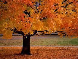kid activities seasonal fall autumn art u0026 crafts