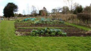 raised beds vs row gardening how to build raised beds