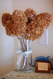dried hydrangeas dried hydrangea home decorating