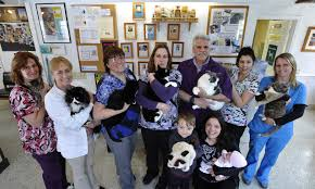 take 10 it u0027s cool for cats u2014 and dogs too in orleans news
