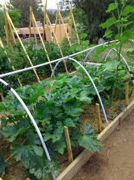 backyard vegetable garden home grown new mexico