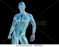 Human Anatomy Upper Body Arm Anatomy Stock Images Royalty Free Images U0026 Vectors Shutterstock