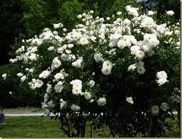 5 flowering plants for a northern utah garden porches gardens
