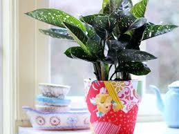 plante verte chambre à coucher quelle plante pour une chambre comment aa marche quelle plante