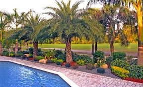 lovable south florida landscaping ideas 1000 ideas about florida