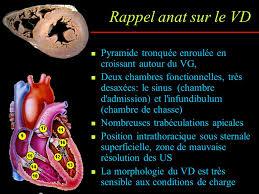 chambre de chasse l exploration échocardiographique du ventricule droit en routine
