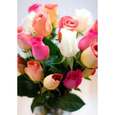 Dozen Roses Wrapped Dozen Roses Colors