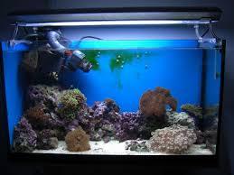 Nano Aquascaping Nano Reef Aquarium Aquascaping A Nano Reef Aquarium