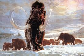 scientists bring mammoth boston globe