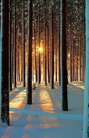 best 25 winter sun ideas on winter images winter and