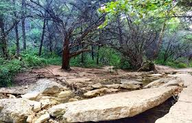 Backyard Walking Paths Top 5 Tucked Away Hiking Trails In Austin 365 Things To Do In
