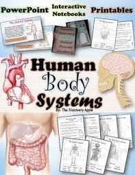 best 25 human body activities ideas on pinterest systems of