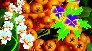 Flower Gardens Wallpapers - flower garden orange white essence flowers yellow daffodils green