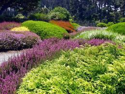 botanical gardens fort bragg ca festival of lights heath heather collection at mendocino coast botanical gardens
