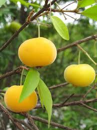 polynesian produce stand uvaia ornamental fruit