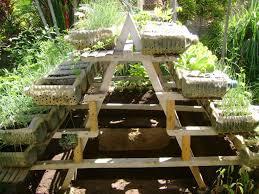 fresh container gardening alberta vegetables 6096