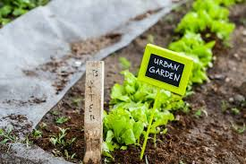 Benefits Of Urban Gardening - how community gardens help and even hurt mnn mother nature