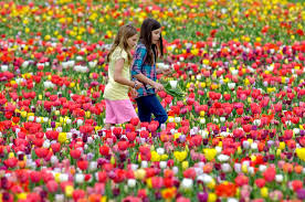 you won u0027t believe this is flower garden most beautiful flower