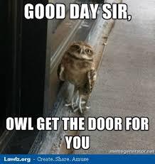 Owl Birthday Meme - beautiful owl birthday meme night owl meme kayak wallpaper
