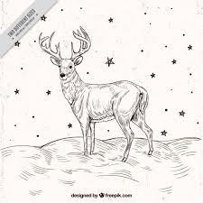 deer vectors photos and psd files free download