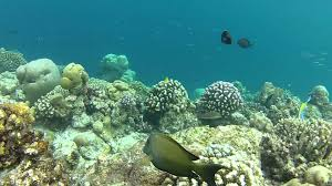 maldives snorkelling at veligandu island with the gopro hero2