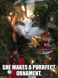 Cat Christmas Tree Meme - christmas tree cat imgflip