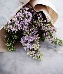 77 best lilacs images on pinterest flowers lilacs and beautiful