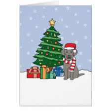 weimaraner cards greeting photo cards zazzle