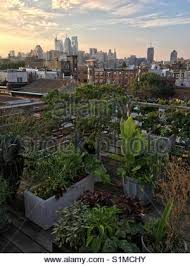 Urban Gardening Philadelphia - philadelphia city rooftop view with urban skyscrapers stock photo