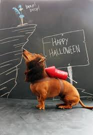 Halloween Costumes Wiener Dogs 25 Dachshund Halloween Costumes Ideas