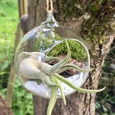 hanging air plant terrarium kit woodland themed tillandsia