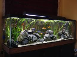 43 best aquarium images on aquarium ideas aquascaping