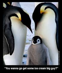 Cute Penguin Meme - bradfordhines com cute and funny animals