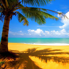 Palm Tree Wallpaper On The Coast Of Somewhere Beautiful Lay Me To Rest Where My