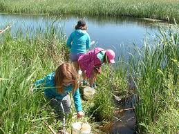 manitoba native plants out of the classroom into the manitoba marsh duc lizard lake