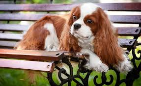 cute dog christmas wallpapers dog cute love coolk cuddle doggie dogs christmas wallpaper dogs