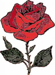 red rose sketch vector free download