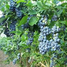 Fruit Tree Garden Layout Fruit Trees And Berries Portland Edible Gardens Raised Garden