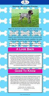 belgian sheepdog anesthesia 49 best images about puppy packet on pinterest dog breeds dogs