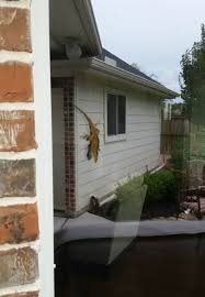 i took a picture of a lizard on a window it looks like a massive